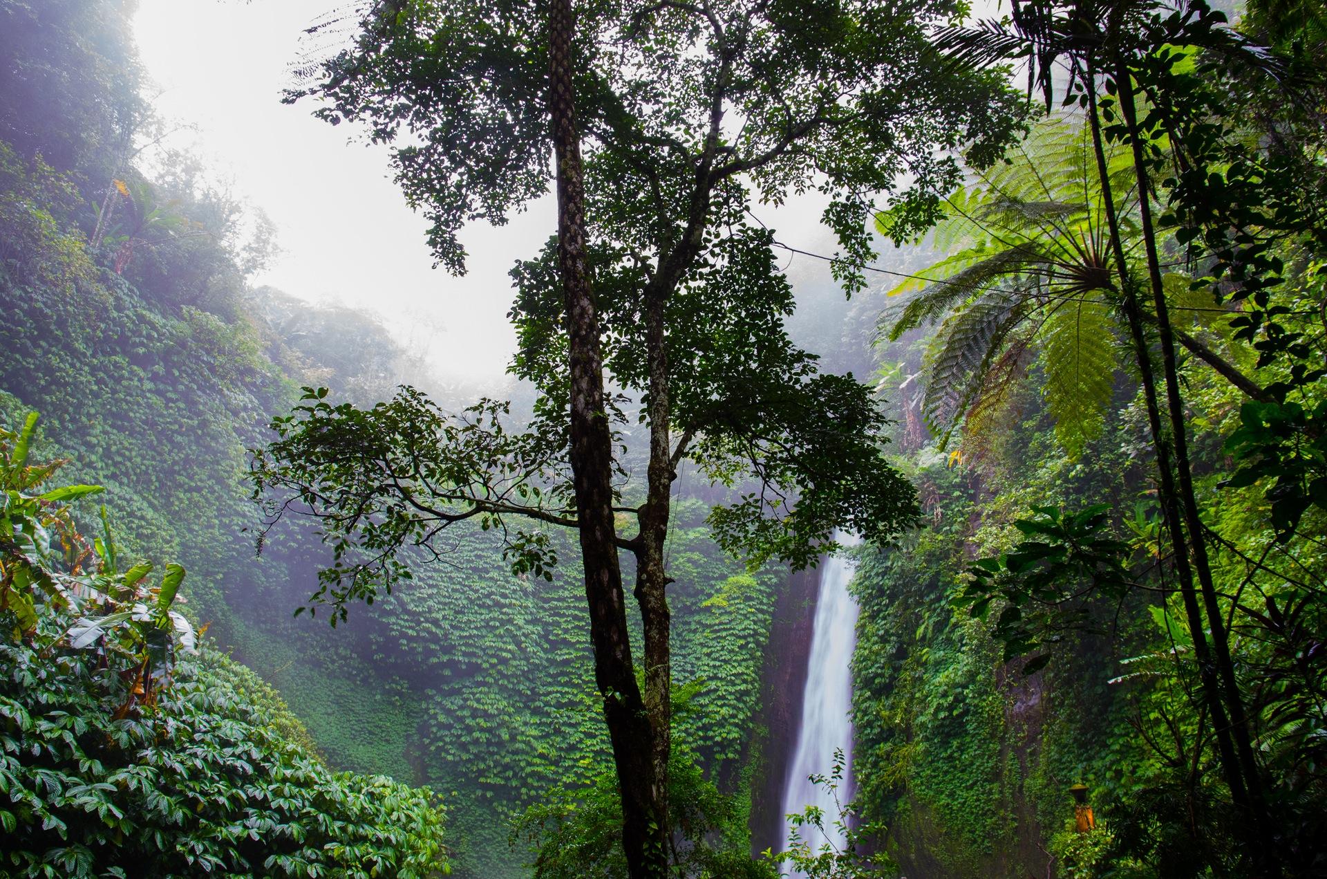 skövling av regnskog